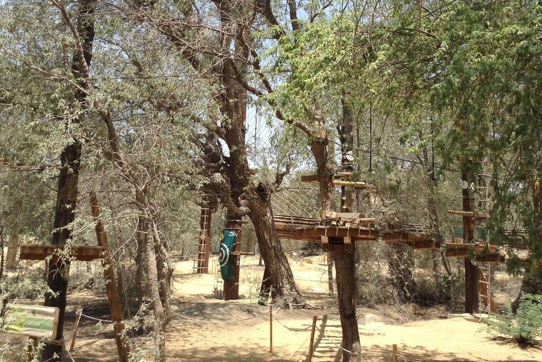 Parque de plataformas sobre árboles situados en la arena del desierto.