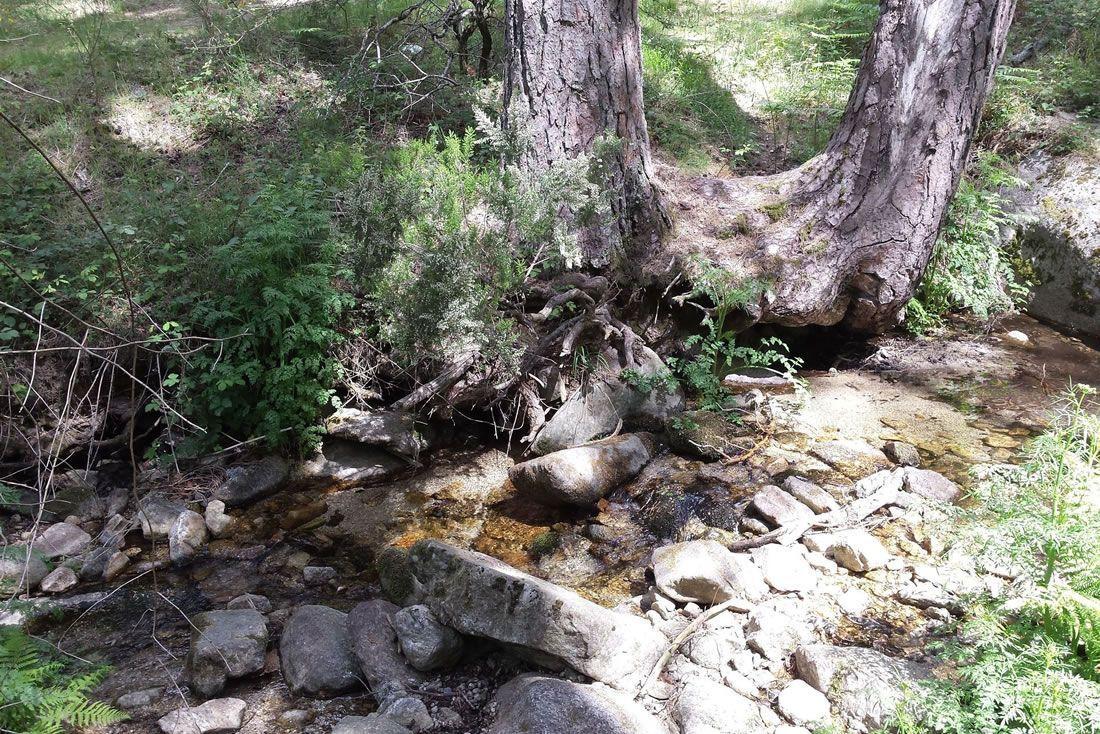 Este pequeño paso de agua está descalzando los árboles, hay que evaluar si eso hace peligrar su estabilidad.
