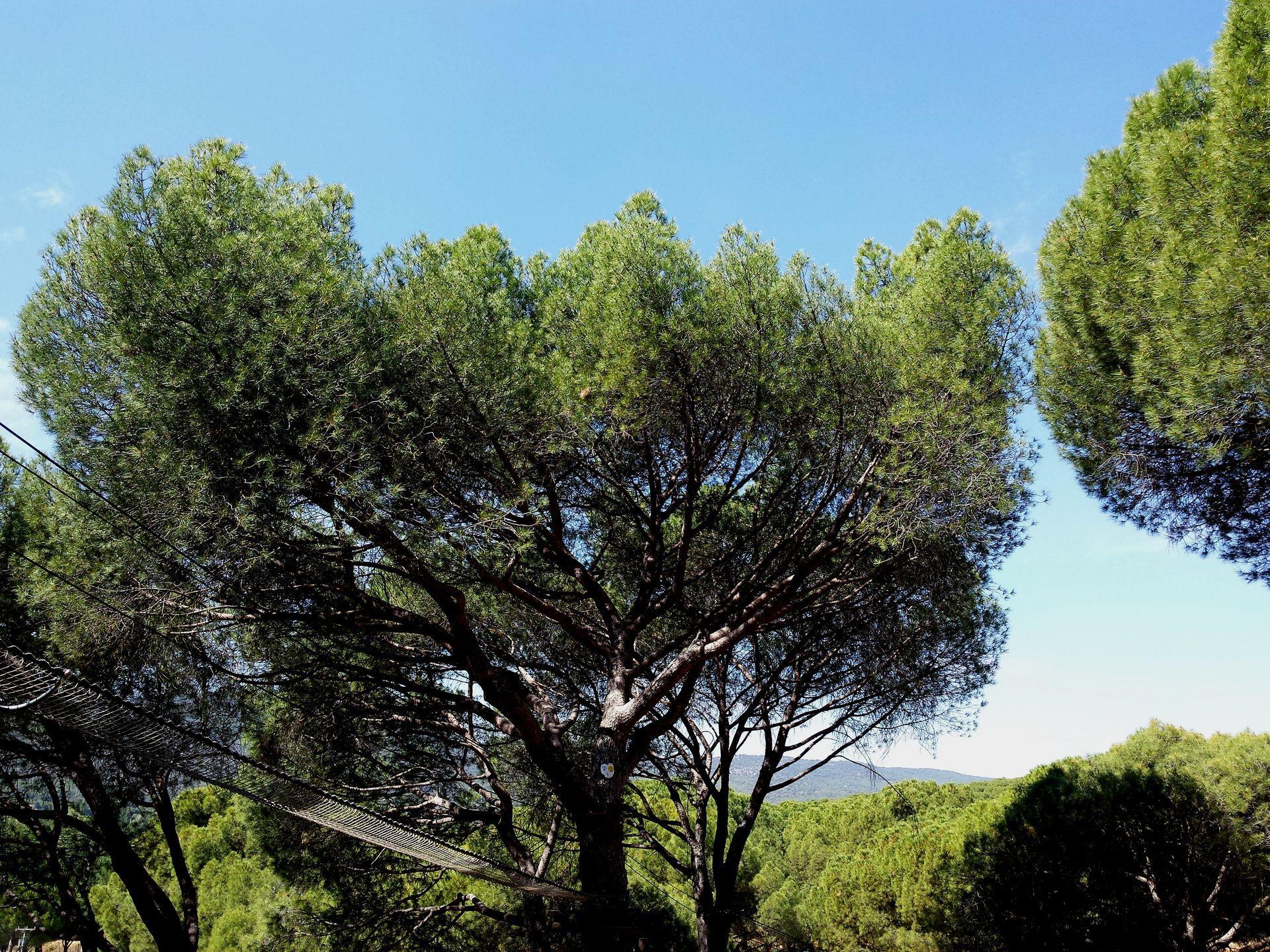 plantasana-slide-o1.jpg